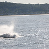Jersey shore whale watching bill mckim june25th-4732