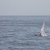 Jersey shore whale watch tour (811 of 858)
