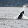 Jersey shore whale watching bill mckim june25th-4723