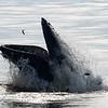 Bill McKim jersey shore whale watch tour (1011 of 637)