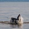 Bill McKim jersey shore whale watch tour (712 of 637)