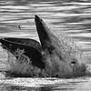 Bill McKim jersey shore whale watch tour (1011 of 637)-Edit