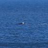 Whale Febuary-8925