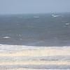 sea birds-2844