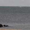 whale-208