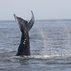 Jersey shore whale watch tour (502 of 858)-2