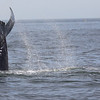 Jersey shore whale watch tour (502 of 858)