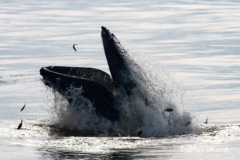 Bill McKim jersey shore whale watch tour (1011 of 637)-2
