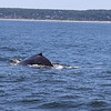 whales7-08-5284