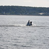 Jersey shore whale watching bill mckim june25th-4717-3