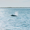 Jersey shore whale watching bill mckim june25th-4743