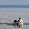 Bill McKim jersey shore whale watch tour (713 of 637)