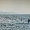 bill mckim jersey shore whale watch  (715 of 492)