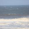 sea birds-2841