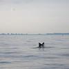 Bill McKim jersey shore whale watch tour (972 of 637)