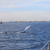 Jersey shore whale watch tour (230 of 858)