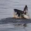 Bill McKim jersey shore whale watch tour (890 of 637)