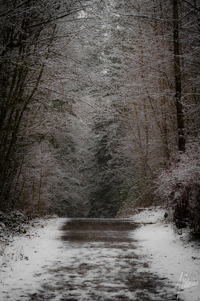 Snow in Issaquah