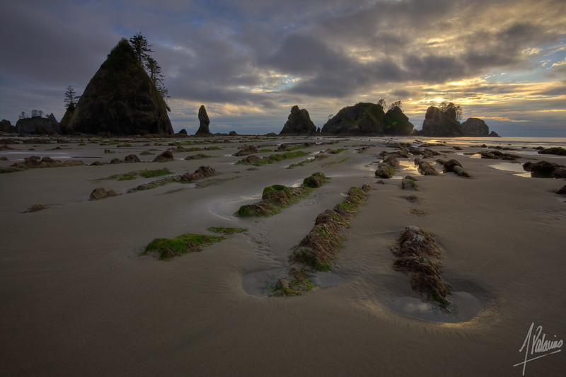 Point of Arches, Shi Shi Beach, Washington