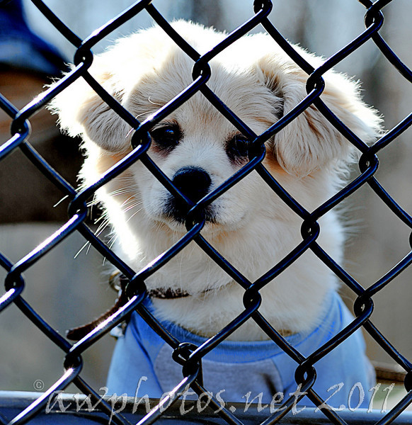 I saw this little guy looking at me through the fence at the Penn State Behrend softball game, and I couldn't pass up the photo op.