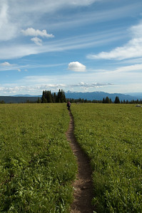 Heading through the Meadow on Trophy Mountain back towards the trail leading back down to the base.