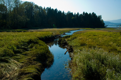 Along the Rocky Point boardwalk you can see lush green grass and marsh, but only in the summertime.