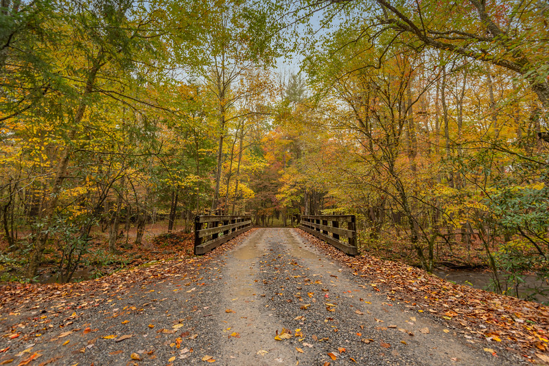 Autumn's Lane