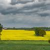 Across Golden Fields