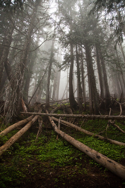 Foggy forest in Olympic National Park