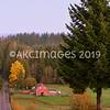 AKC_1265