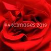 'Crimson Rose'