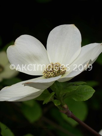 Botanical, Floral & Natural Subjects