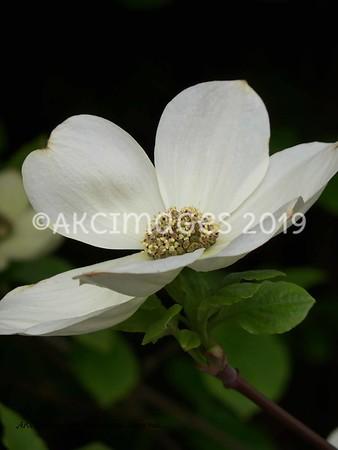 Blossoms, Brambles, Weeds & Woodlands
