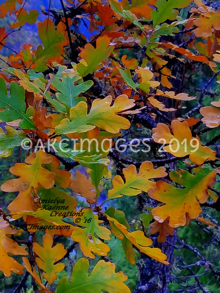 'Elegant Oak Leaves'