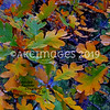 'Elegant Oak Leaves'