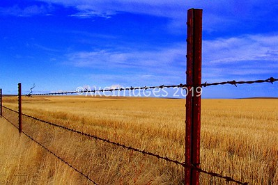 Fence Line ; Featured Collection