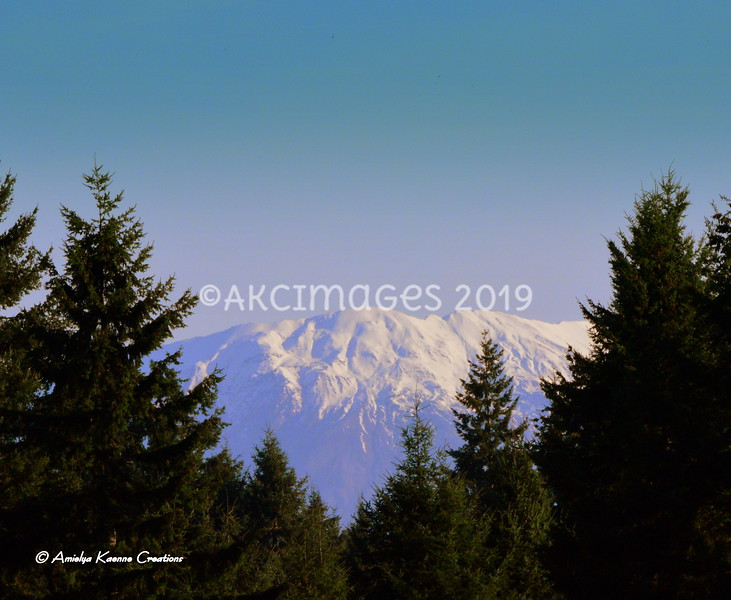 AKC_1419