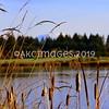 AKC_1395