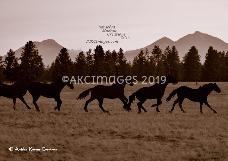 'Shadow Herd; 5 Piece Band' 48x34