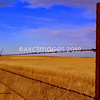 'Fence Line 1'