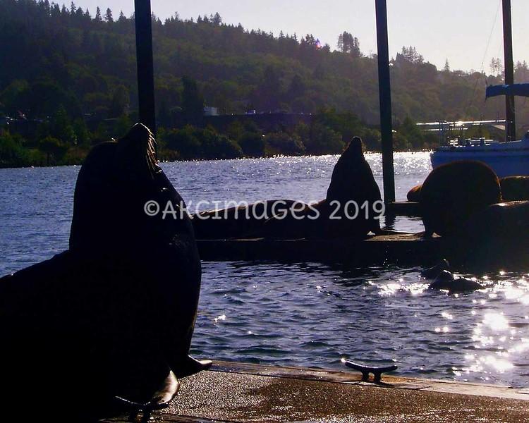 'Dock Worker'