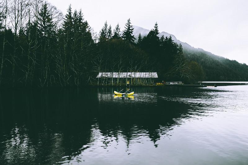 Hoh Rainforest, Washington
