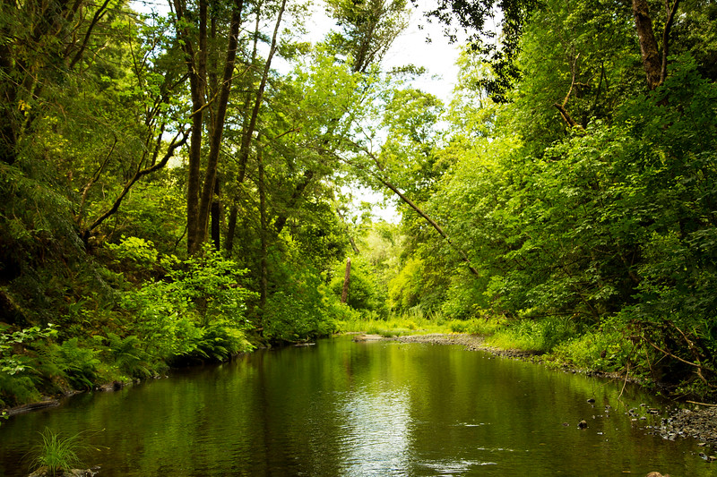 Stream in the Redwoods