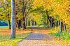 Letchworth Fall Pathway