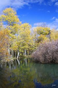 Near Silver Lake, Ca - June Loop Highway 395.  Fall colors but looks like Spring.