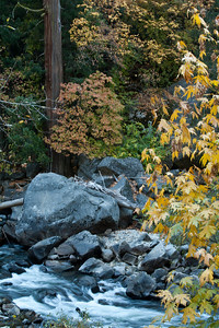 Yosemite Valley - Fall colors at 120/140 split