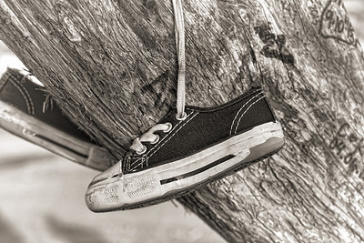 Shoe tree just north of Reno, Nv.  BW close up of kid's sneaker.