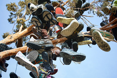 Shoe tree just north of Reno, Nv