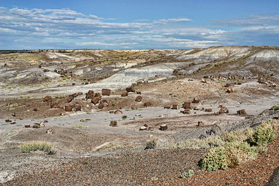 Field of petrified logs - Painted Desert/Petrified Forest, Arizona.