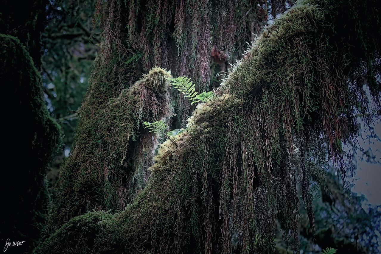 Rain%20forest%209%20restyle-X2.jpg